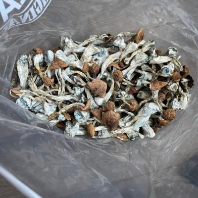 Z Strain Magic Mushrooms Bag