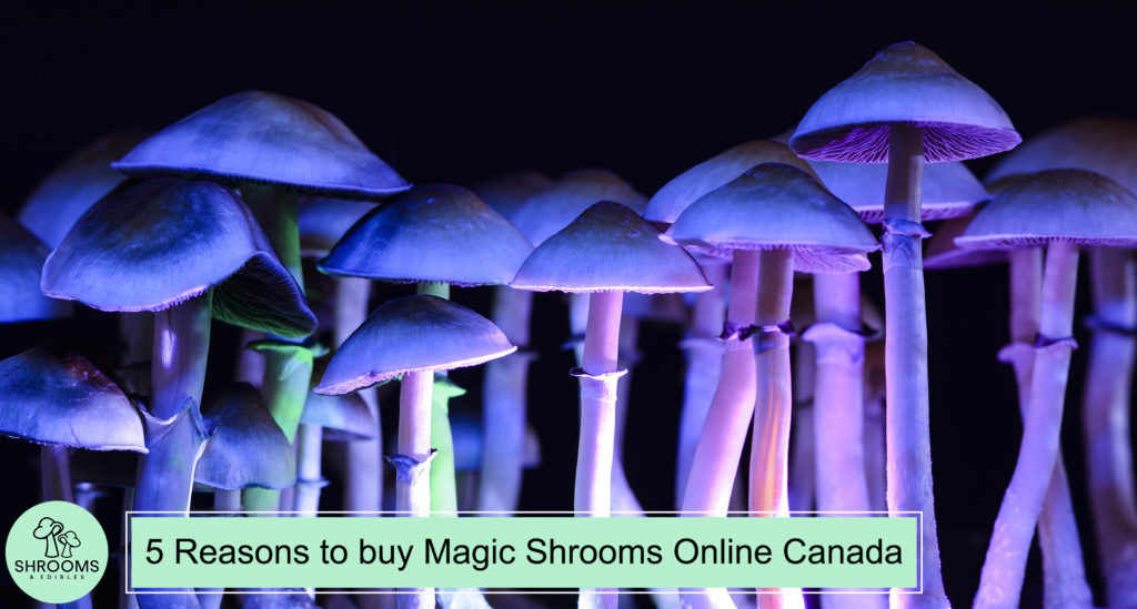 5 Reasons To Buy Magic Shrooms Online Canada